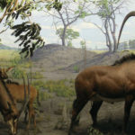 Giant Sable Antelope image