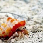 Hermit Crabs image