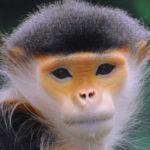 Old World Monkeys image