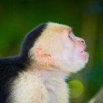 Spider Monkey image